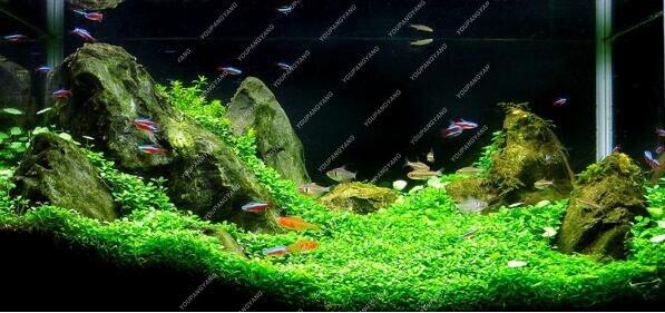 Us 0 45 49 Off 500 Pcs Bag Akuarium Tanaman Tanaman Ikan Akuatik Air Acak Grass Dalam Planta Plante Mempercantik Tanaman Eksotis Tanaman Campuran In