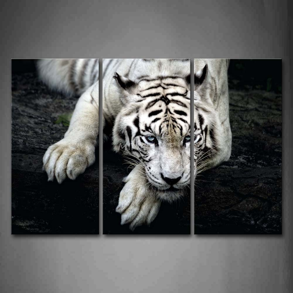 3 Piece Black And White Wall Art Painting White Tiger Lie