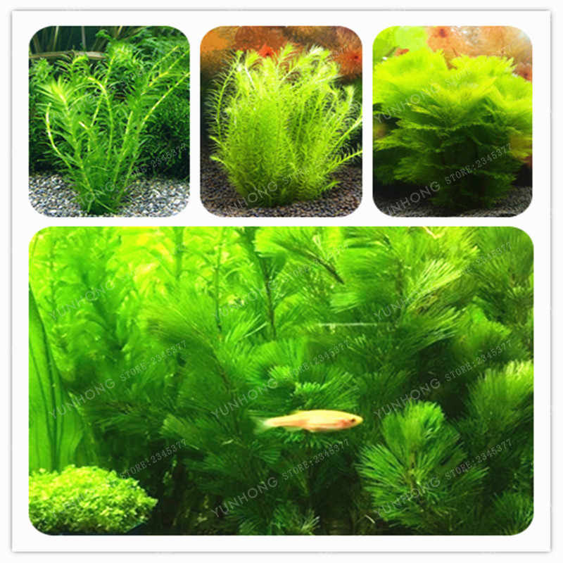 500 Pcs New Aquarium Grass Bonsai Water Aquatic Plant Bonsai Family For Decorate The Aquarium Green Water Grass Decor Landscape