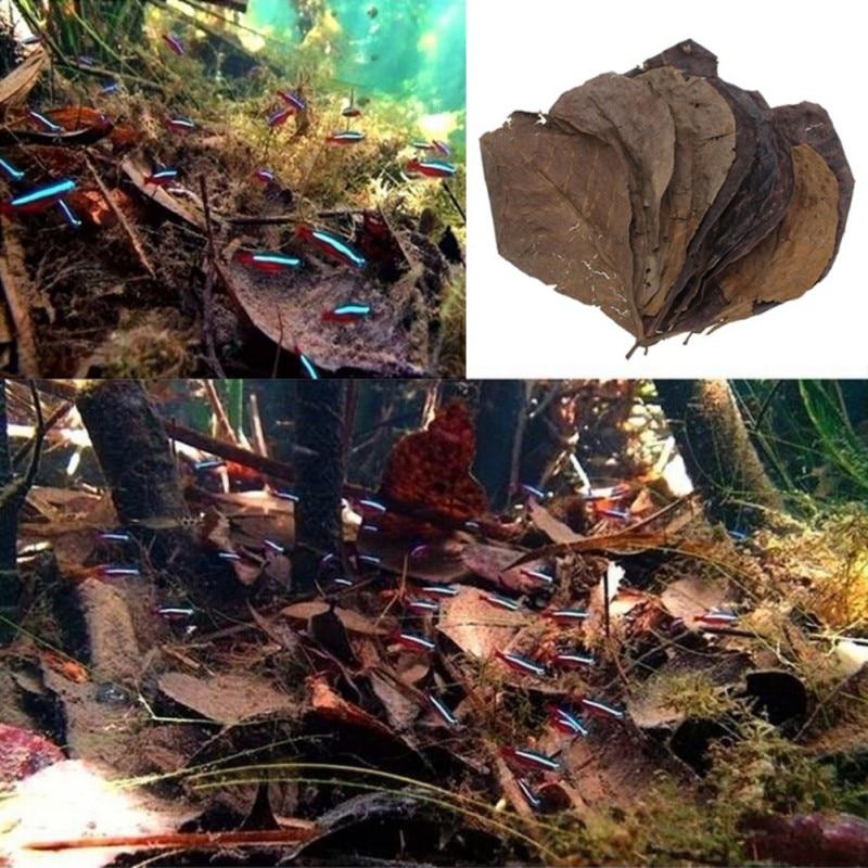 Natural Olive Terminalia Catappa Leaf Fish Tank Aquarium Antibacterial Lower PH Level Water Quality Accessories 50pcs