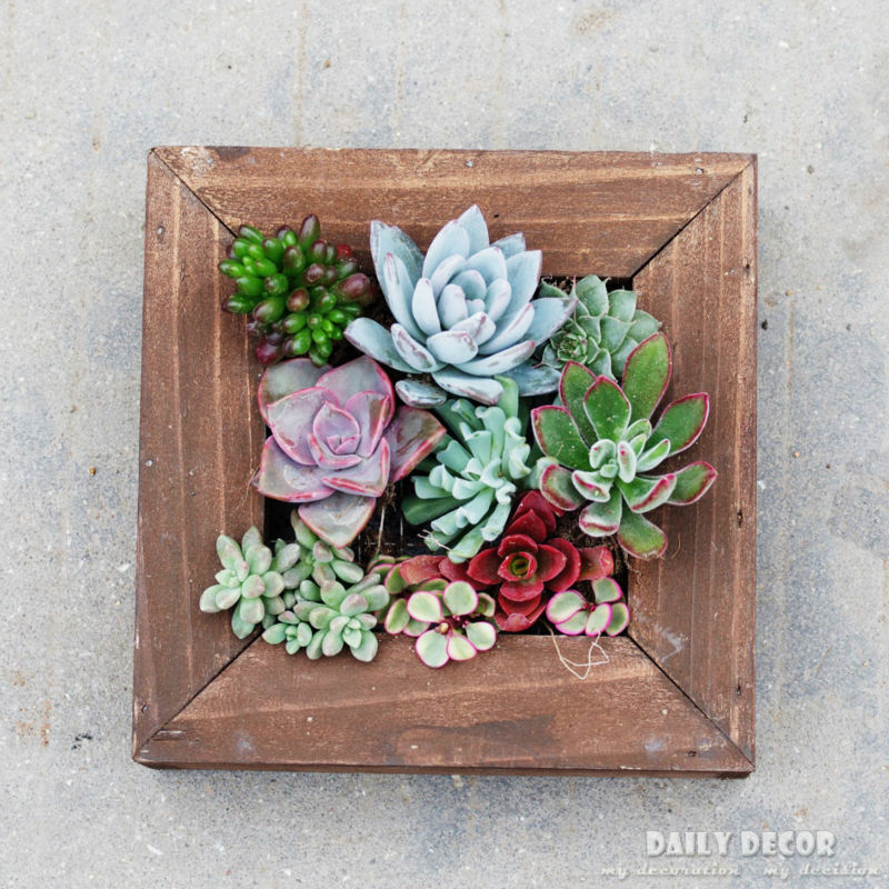 Handmade succulent plants solid wooden wall mounted flower pot wood wall hanging flower pots for meaty plant frame flowerpot