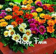 Buy   courtyard essential colorful flower seeds  online