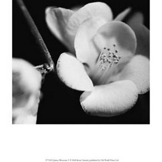 Quince Blossoms V Poster Print by Renee Stramel (10 x 13)