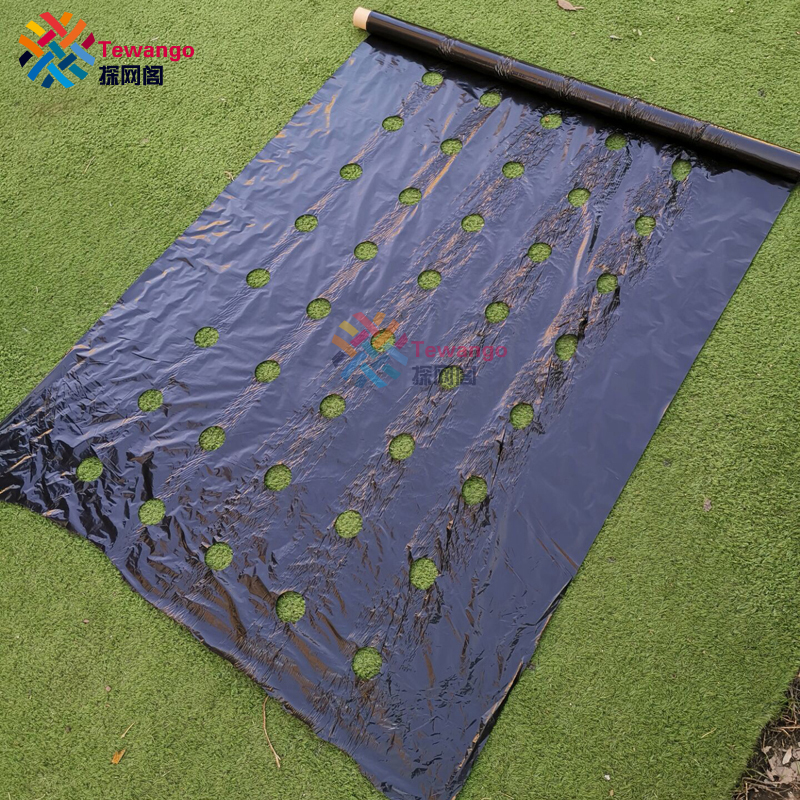 Tewango Biodegradeable Weed Control Mulch Film Allotments Veg Patch Borders 0.95m X 10m/20/50M Ground Cover 0.02MM Thickness
