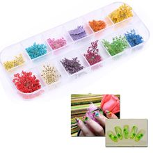 Trendy Charming Exquisite 12 Colors Real Nail Dried Flowers Nail Art Decoration for UV Gel Acrylic DIY Tips Stickers