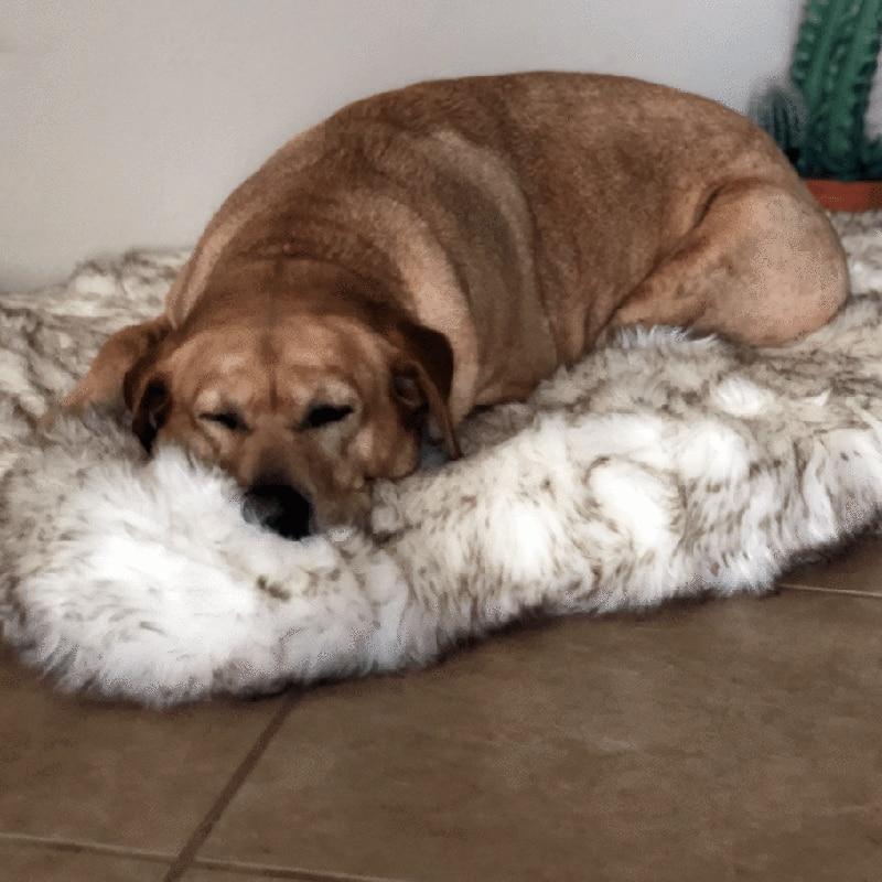 Faux Fur Orthopedic Dog Bed 1