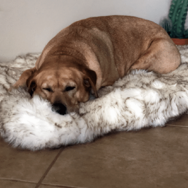 Faux Fur Orthopedic Memory Foam Dog Bed