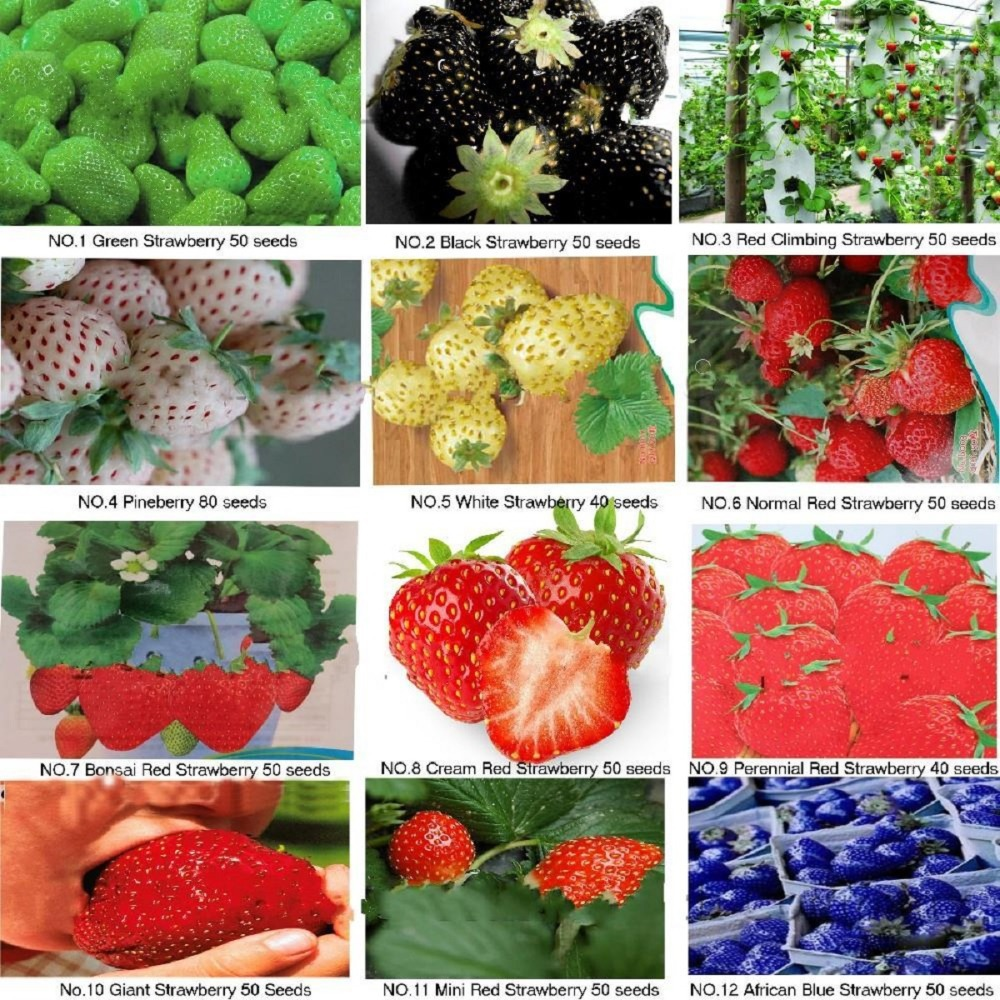 CHEAP KINDS OF DIFFERENT STRAWBERRY SEEDS GREEN WHITE BLACK RED GIANT MINI BONSAI, NORMAL PINEBERRY ON SALE 2014 - yuelan song's store