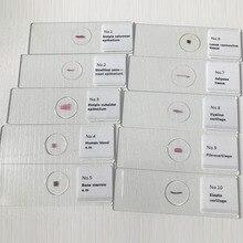50 sztuk mieszane histologii slajdy zestaw histologii preparowane szkiełka mikroskopowe zestaw