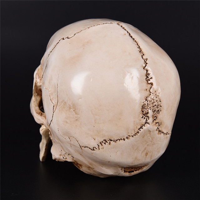 Resin Replica Medical Model Lifesize 1:1 Halloween Home Decoration High Quality Decorative Craft Skull 3