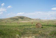 Online Get Cheap Photo Farm Backdrop Aliexpress Com