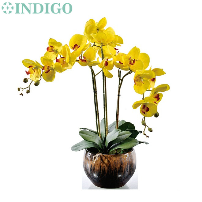 Online Buy Wholesale Yellow Orchid Leaves From China