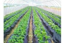 Мульчи. plastico сорняки. шелк, почву. нагревает invernadero убивает полиэтиленовая черный, парниковых