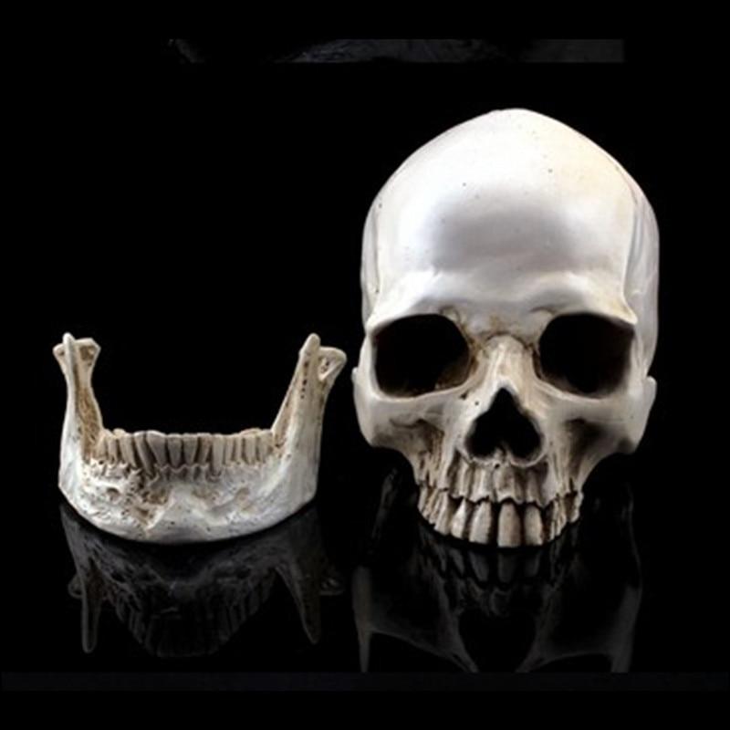 P-Alev Simülasyon Modeli 1: 1 İnsan Kafatası Reçine Kafatasları - Ev Dekoru - Fotoğraf 2