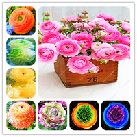 10pcs A Bag Ranunculus Flower Bulbs Not Ranunculus Seeds Ranunculus Flower Bulbs Perennials Bulbos De Flores