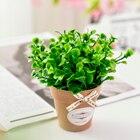 Mint Grass Mint Gras...