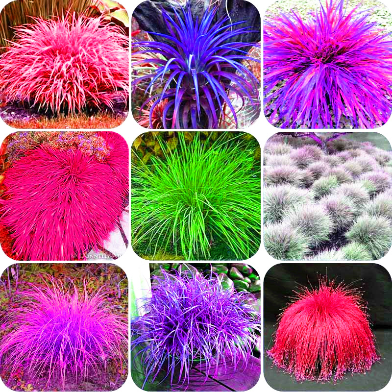 Popular grow grass buy cheap grow grass lots from china for Easy to grow ornamental grasses