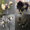 Camouflage Jacket 5
