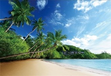 Laeacco Sea Beach Palm Tree Summer Scenic Photography Backgrounds Customized Photographic Backdrops For Photo Studio
