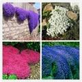 100 pçs/saco Creeping Tomilho Sementes ou Azul ROCHA CRESS Sementes-cobertura Do Solo Perene flor, crescimento Natural para jardim de casa