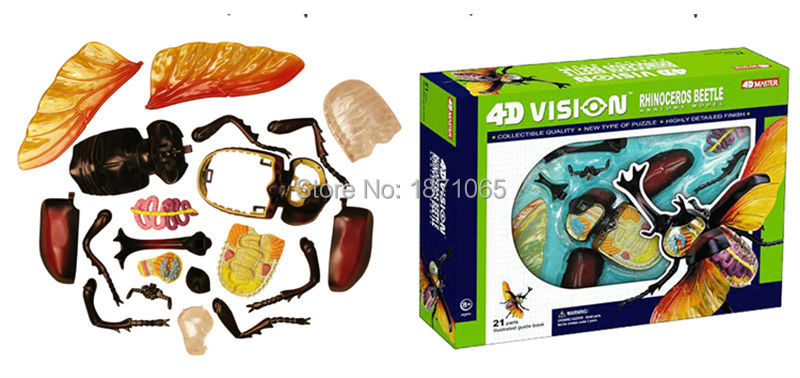 1 Stücke Anime 4D Vison MASTER Tier Anatomie Modell Frosch Skorpion ...