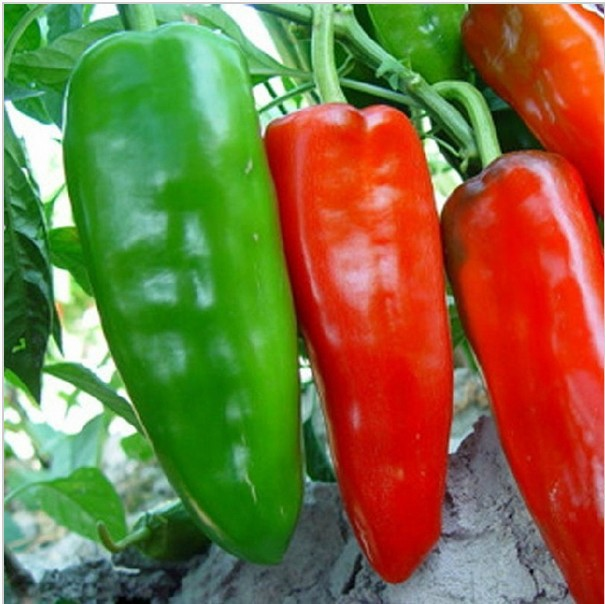 Vegetable fruit seeds USA bull horn pepper seed The fruit is big spicy moderate Bonsai p ...