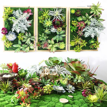 Succulents plant Spring Grass Plant Succulents plant Grass DIY bonsai Potted Garden Home Exotic Plant Ornamental Bonsai