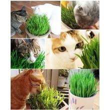 400pcs/bag Cat Grass Seeds Foliage Plant Wheat Mint snacks bonsai Home Garden High germination Free Shipping