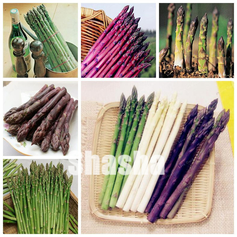 Asparagus Officinalis Bonsai One Of The World's Top Ten Dishes The Healthiest Delicious Nutritious Vegetable Bonsai 100 Pcs