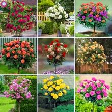 100pcs Rose Bonsai Flower plants Beautiful Tree plant Perennial Petals Plant Pot For Home Garden