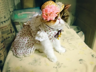 Free shipping adjustable dog hat summer lace pet sunhat cat cap for dogs accessories gorras para perros mascotas