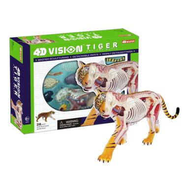 The 4D Master simulates the disassembly of the tiger anatomical assembly model leblanc maurice the teeth of the tiger