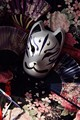 New Hand-Painted Full Face Japanese Fox Mask Kitsune Cosplay PVC Masquerade Collection Noh Party Carnival Chiyoda Palace feather