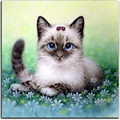 diy Diamond Embroidery Cute cat in the grass diamond painting set for embroidery resin handmade crafts home decoration paintings