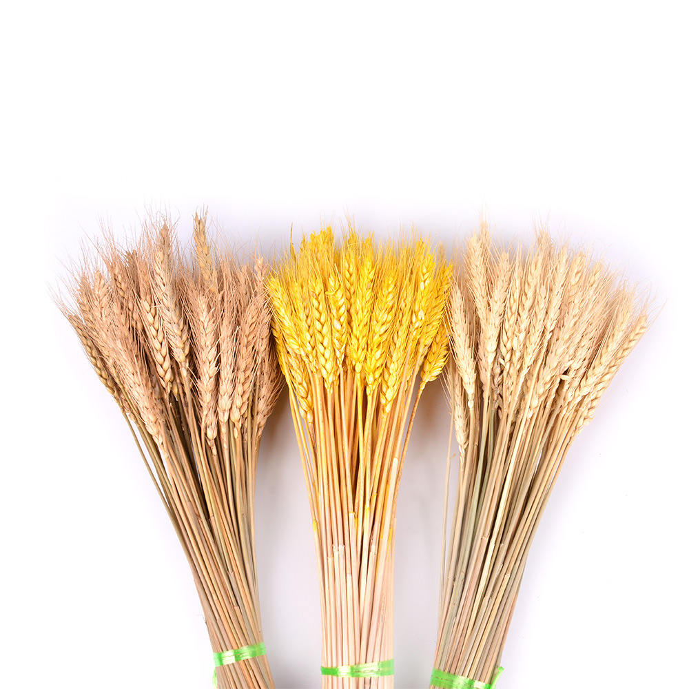 Decoration Wheat-Simulation Dried-Flower Natural 5/10pcs Wedding SUEF -1
