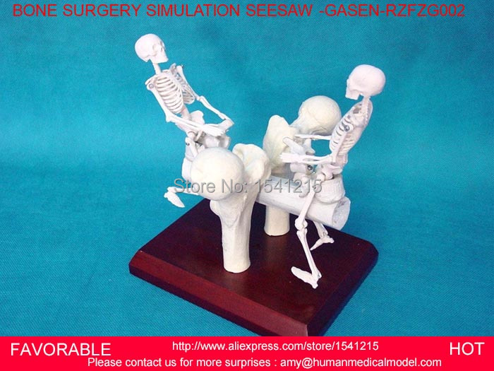 HUMAN ANATOMICAL ANATOMY SKELETON MEDICAL MODEL,HUMAN SKELETON MODEL TEACHING AID MINI SKELETON,SKELETON ART GASEN-RZFZG002 human anatomical kidney