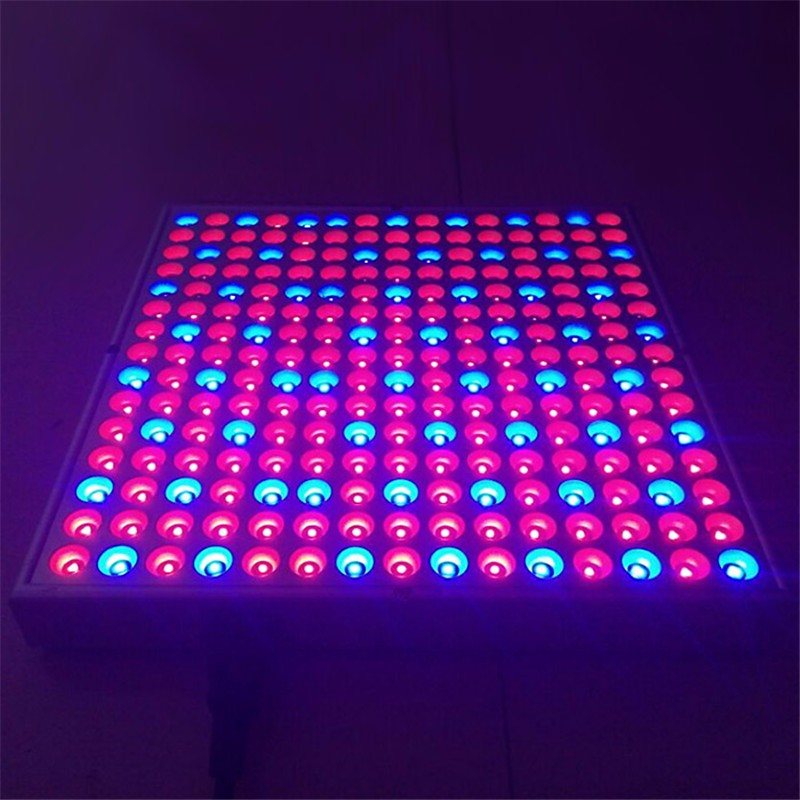 Red Blue LED Grow Light08