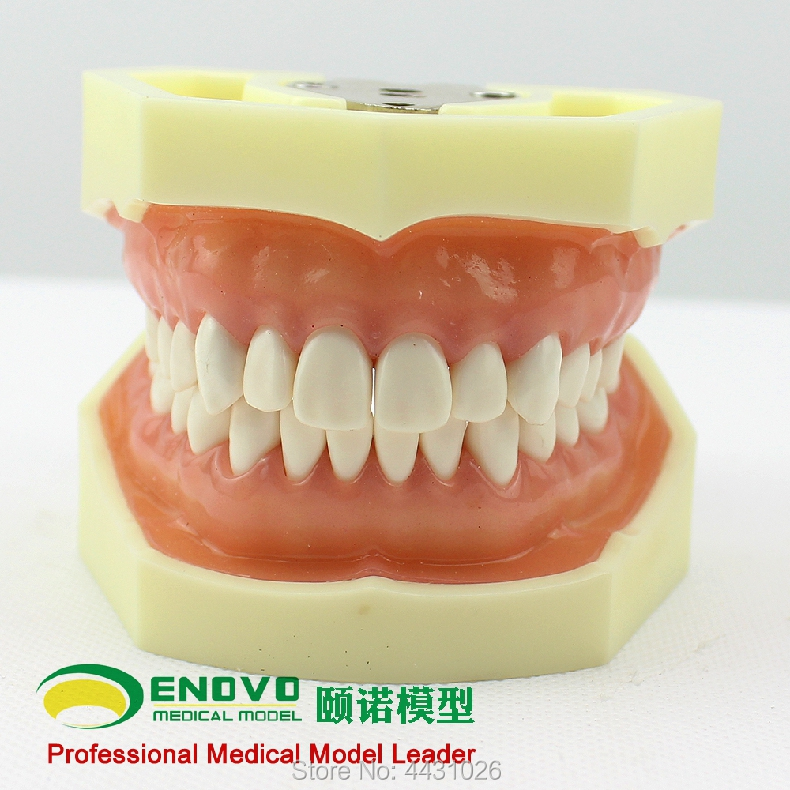 ENOVO The dental prosthesis of dental prosthesis was used to prepare the gingival prosthesis analasing the dental industry