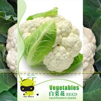 Chinese Cabbage Flower Cauliflower Seeds, 60 Seeds(1 Original Pack), Non-GMO Edible Organic Vegetable Seeds SOW ALL YEAR