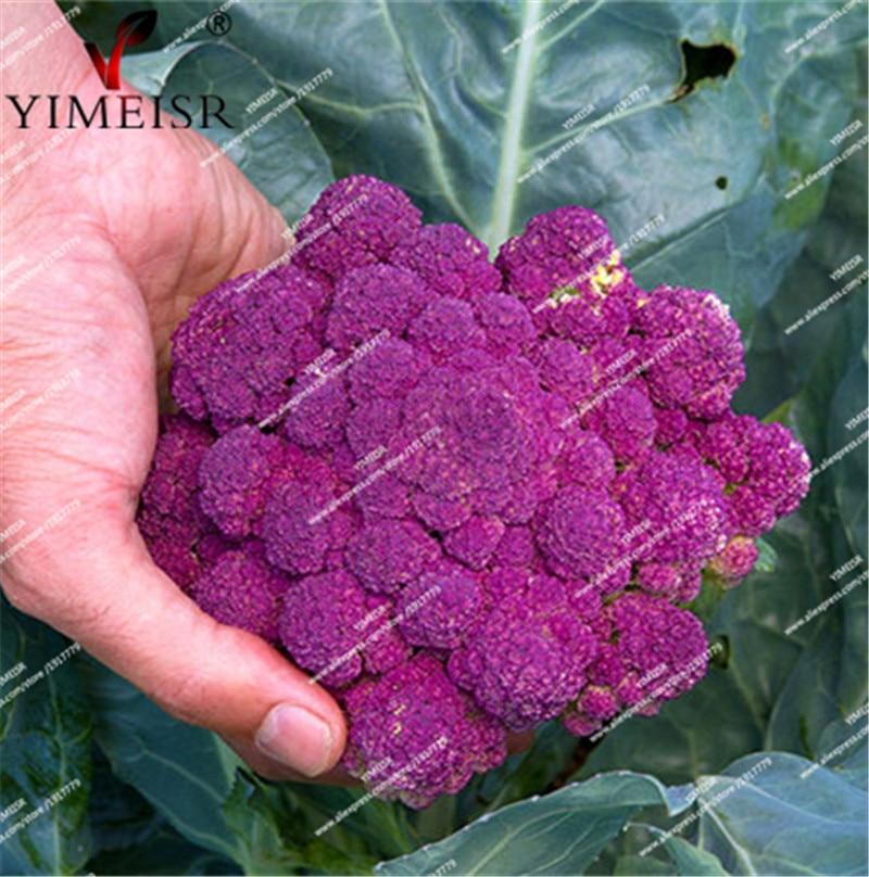 Purple Cauliflower seeds indoor plants vegetables seeds for home garden Bonsai brocoli Seeds 30pcs/bag