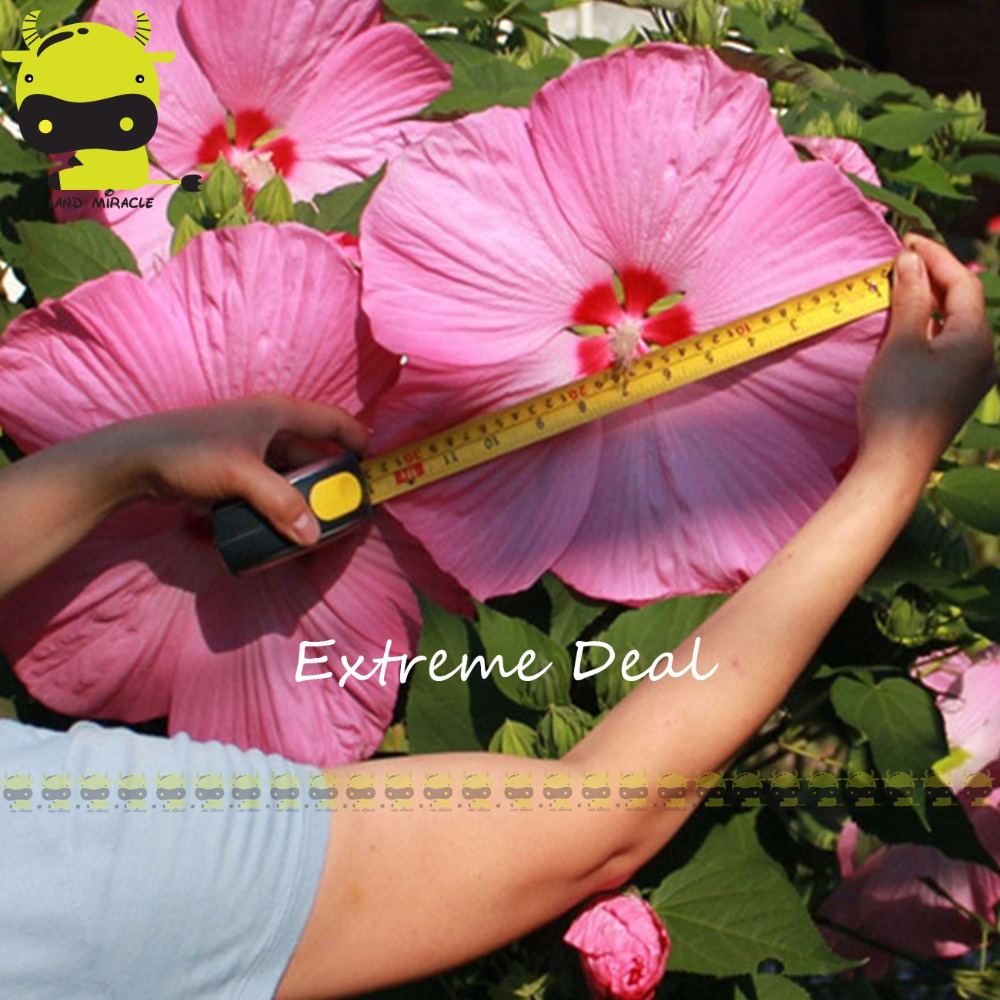 50 Seeds Giant Hibiscus Exotic Coral Flowers Seeds Home Garden