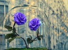 Парк Алмазная вышивка фиолетовые розы 5d diy мозаика для рисования