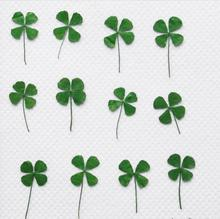 120pcs Pressed Dried Clover Leaf Dry Plants For Epoxy Resin Pendant Necklace Jewelry Making Craft DIY Accessories