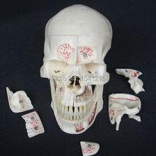 Человеческая голова анатомическая модель мозга модель медицинская наука Обучающие принадлежности мозговой череп анатомическая модель мозга-GASEN-DEN029