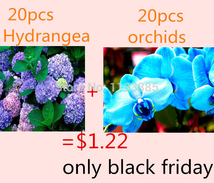 $1.22 get 20 purple hydrangea and 20 blue orchid flower seeds seeds for black friday as gift