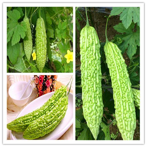 20 Pcs/bag Gold Bell Bonsai Rare Balsam Pear Plant Bitter Gourd Melon Momordica Charantia Vegetable And Fruit For Home Garden