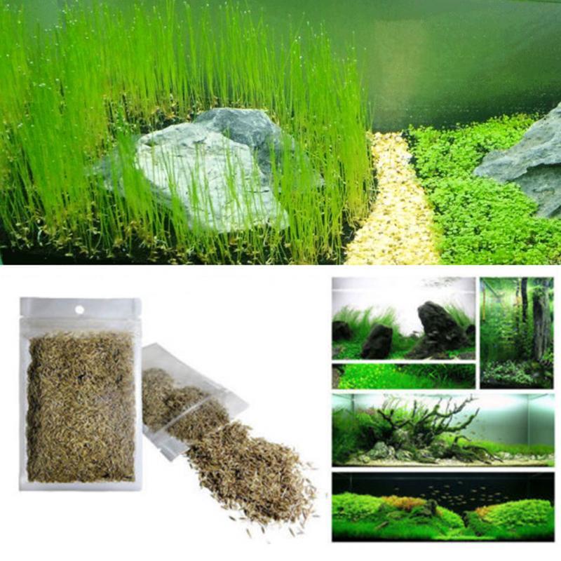 New Plant Grass Aquarium Fish Tank Plants Prospects Grass Seeding Grass Landscaping Plant Decoration Drop Shipping