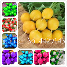 US $0.35 42% OFF|Bonsai 200 Pcs Rare Rainbow Colors Radish Seedsplants Vegetable Juicy And Nutritious Early Spring Radish Plants for Home Garden-in Bonsai from Home & Garden on Aliexpress.com | Alibaba Group