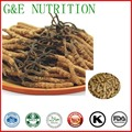 Grau Top Cordyceps/Worm grama/Cordyceps sinensis/Chinês lagarta fungo Extrato Da Cápsula 500 mg x 100 pcs