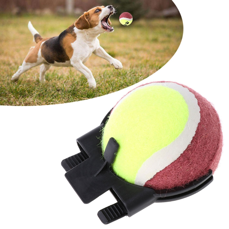 Pet Dog Toy Dog Tennis Ball Self-timer Funny Toy Your Puppy Photo Tool